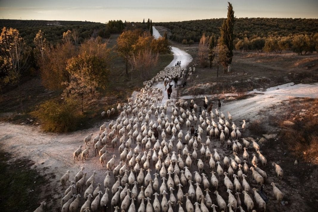 """Transhumance in Spain"" by Susana Giron. Spain. 1° Classified, Journeys & Adventures"
