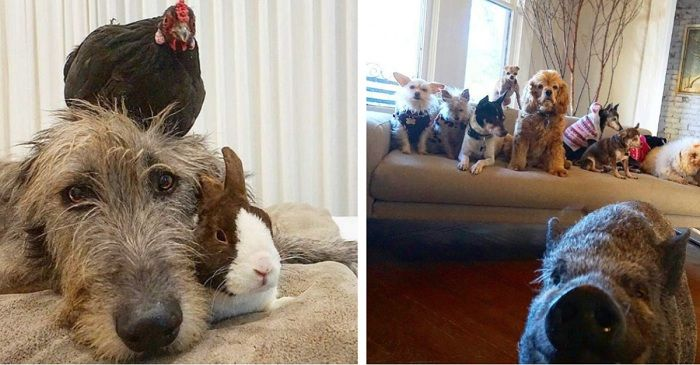 A man adopts abandoned animals