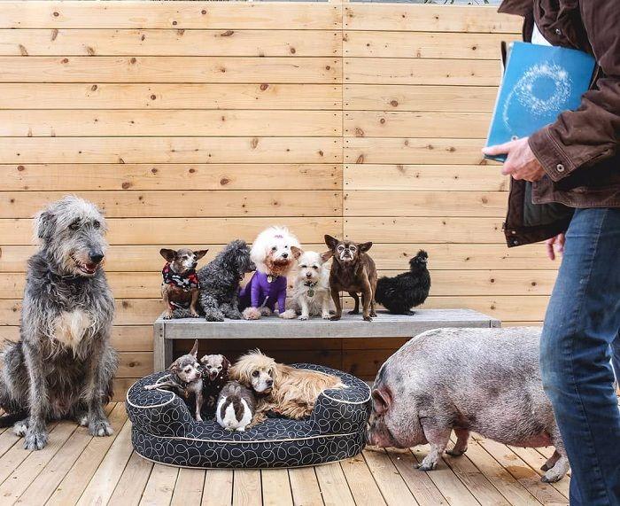 A Man Adopts Abandoned Animals