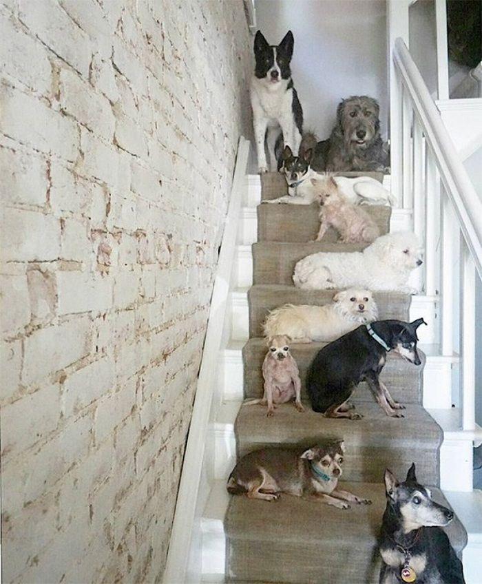 Steve Greig old dogs