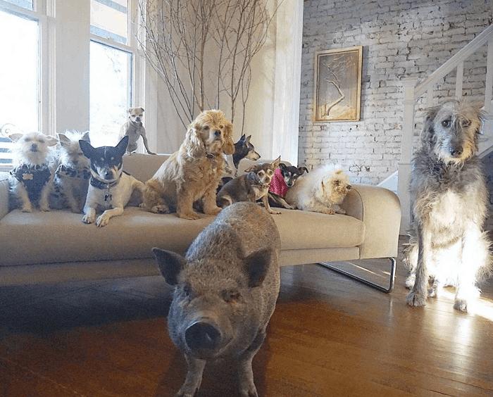 Pets of Steve Greig