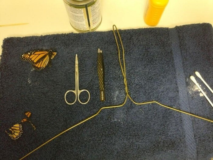 women conducted an operation on butterfly with broken wings
