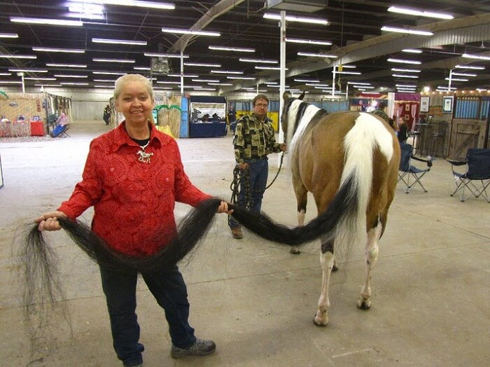 Longest tail on a horse - Interesting World Records from the USA