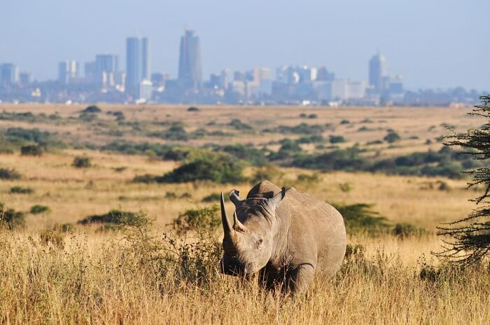 Nairobi National Park, Kenya - Famous Travel Destinations in Africa