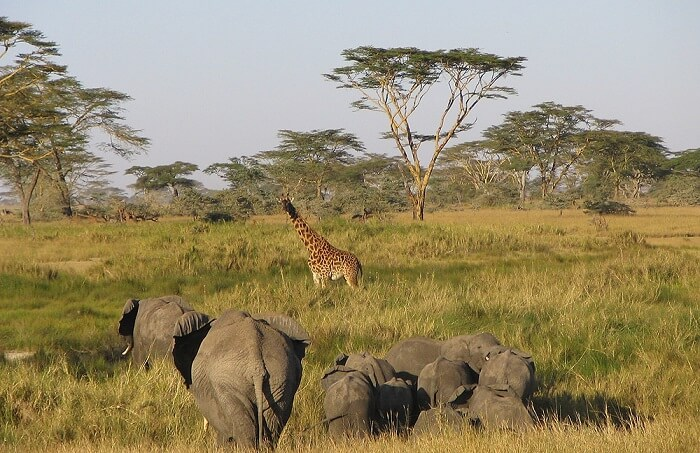 Serengeti National Park, Tanzania - Famous Travel Destinations in Africa