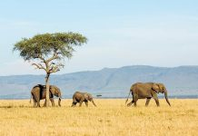 The Most Famous Travel Destinations in Africa to Visit in Winter