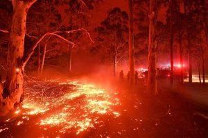 Australia fire has killed 480 million animals