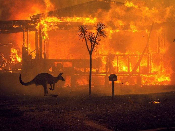 Celebrities Joined Hands to Support the Victims of Australia Bushfires
