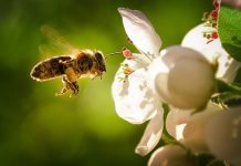 Why the Honeybees are so Important for the World?