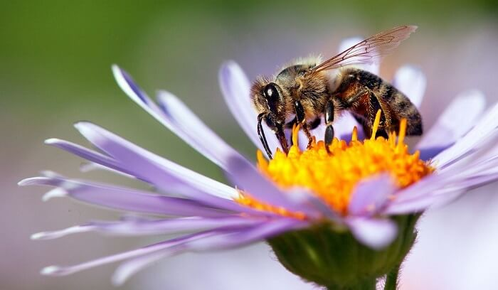 How we can help to save honeybees?