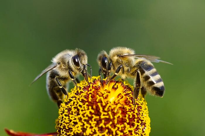 Honeybees are important for the World
