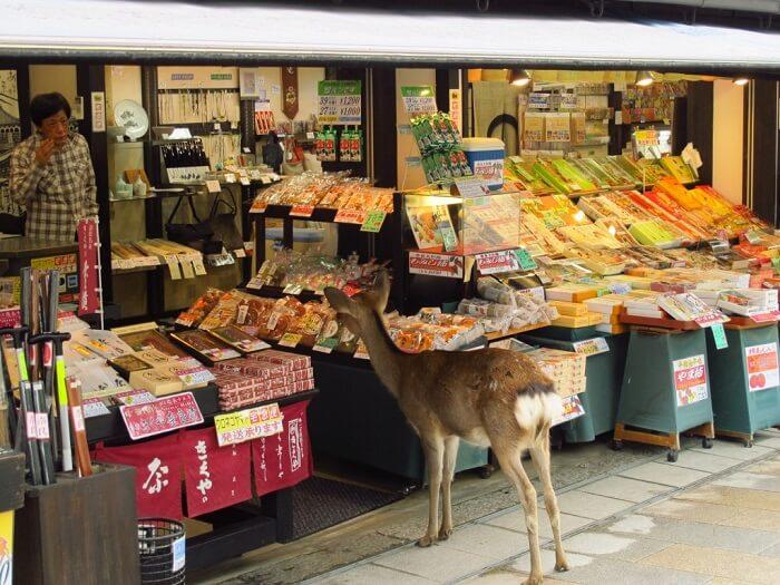 Deer in Nara, Japan - Animals in Quarantine