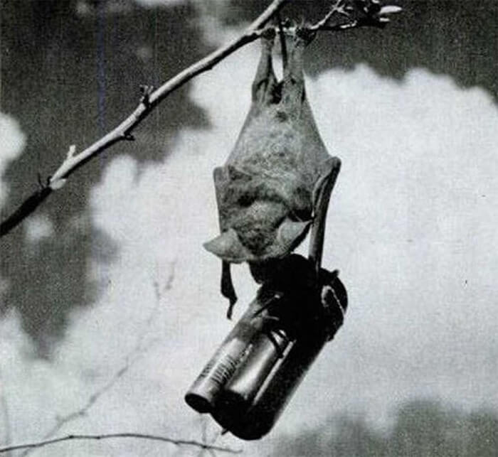Bat Bombs of World War II