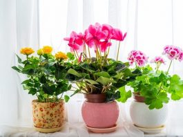 Colorful Plants to Brighten Your Home and Office