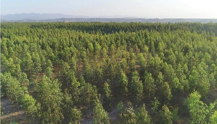 Tree plantation in Pakistan